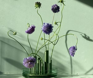 flowers, vases, and still-life image