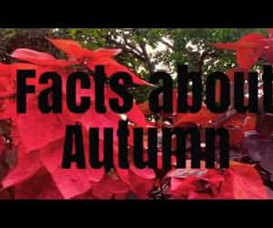 autumn, fall leaves, and youtube image