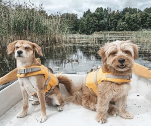 animals, boats, and dogs image