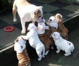 dog, puppy, and bulldog image