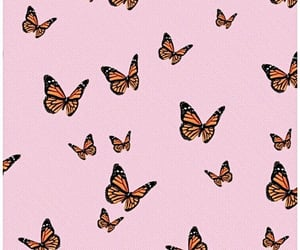 background, beautiful, and butterfly image