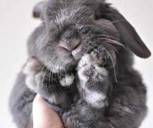 adorable, rabbit, and animal image
