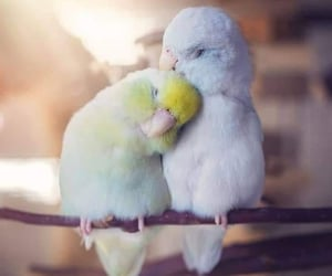 bird, animal, and love image