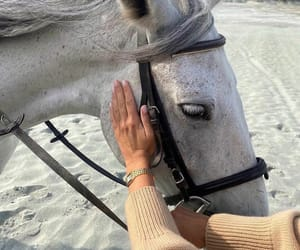 animal, horse, and beach image