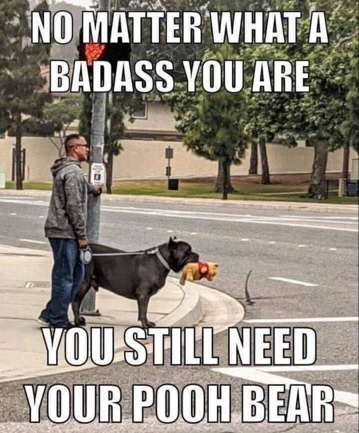dogs are love, fight for animal rights, and big dogs rule image