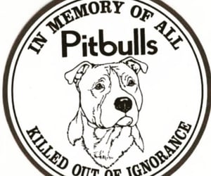 in memory of, dogs are family, and protect the innocent image