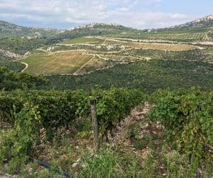 Croatia, wine travel, and Dalmatia image