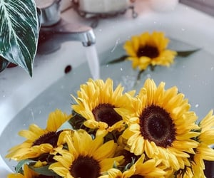 aesthetic, floral, and sunflowers image