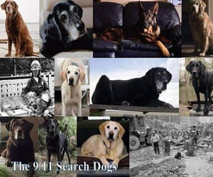 dogs, heroes, and never forget image