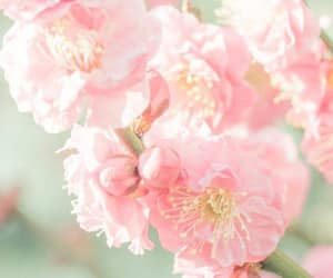 flowers, light pink, and pink image