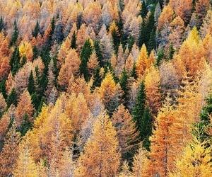 beautiful, change, and fall image