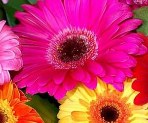 flor, floral, and gerbera image