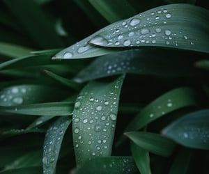 aesthetic, dew, and droplets image