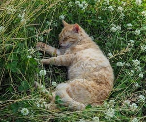 cat, kitty, and weeds image