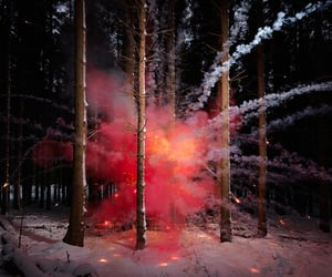 fireworks, forest, and photography image