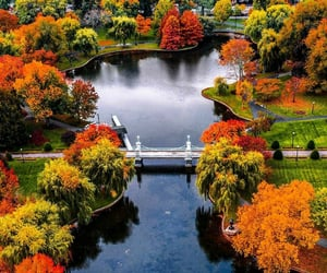 aerial photography, autumn, and boston image