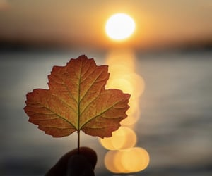 autumn, dreamy, and leaf image