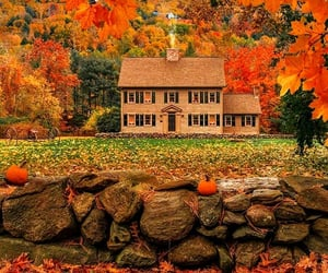 autumnal, fall foliage, and fall image