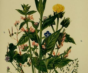 Great Britain, Wild Flowers, and identification image