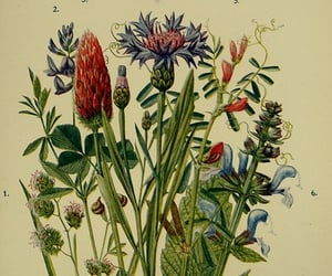 plants, Great Britain, and Wild Flowers image