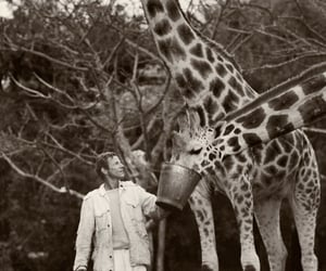 giraffe and peter beard photography image