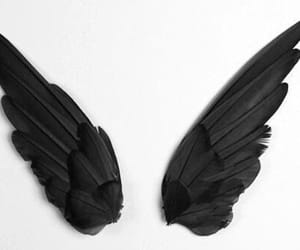 illusions, victor hugo, and black wings image