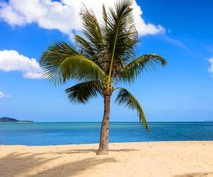 beaches, tropics, and beach lovers image