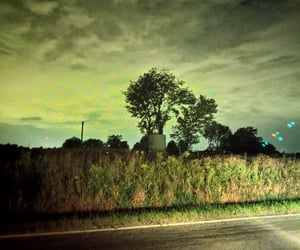 creepy, road, and trees image