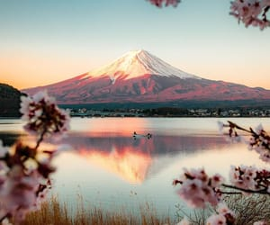 japan, nature, and instagram image