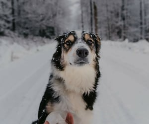 animals, dogs, and hike image
