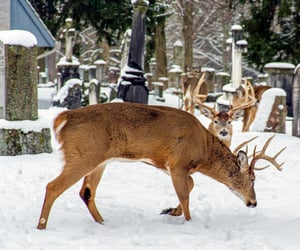 buck, cemetery, and wildlife image