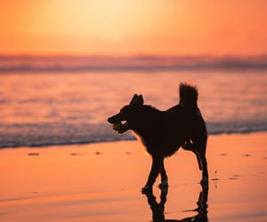 animals, peachy, and pets image