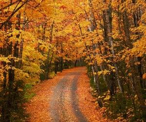 background, beautiful, and fall image