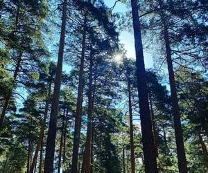 arboles, belleza, and naturaleza image