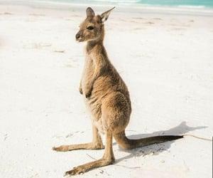 playa, Animales, and naturaleza image