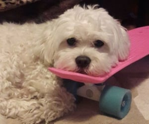 puppy, skateboard, and cute image
