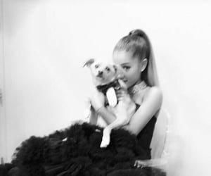 ariana grande, dog, and dangerous woman image