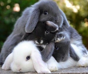 animal, bunny, and pet image