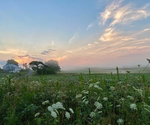 country, meadow, and mist image