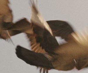 birds, fly, and high image