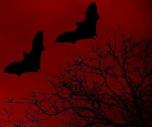 bats, grunge, and red image