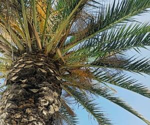 mare, palme, and palma image