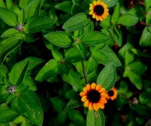 amarillo, hojas, and naturaleza image
