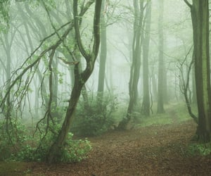 fog and trees image