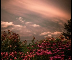 clouds, fade, and flowers image