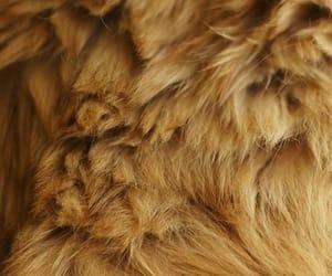 fur and lion image