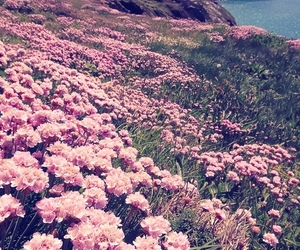 beautiful, flowers, and gras image