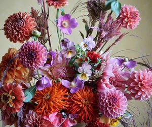 blooming, dahlias, and nature image