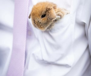 fluffy, weheartit, and hare image