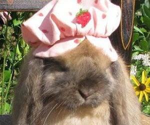 bunny, cottagecore, and animal image